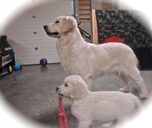 "Miss Daisy & Student (Posh daughter ""LADY"" @7wks)"